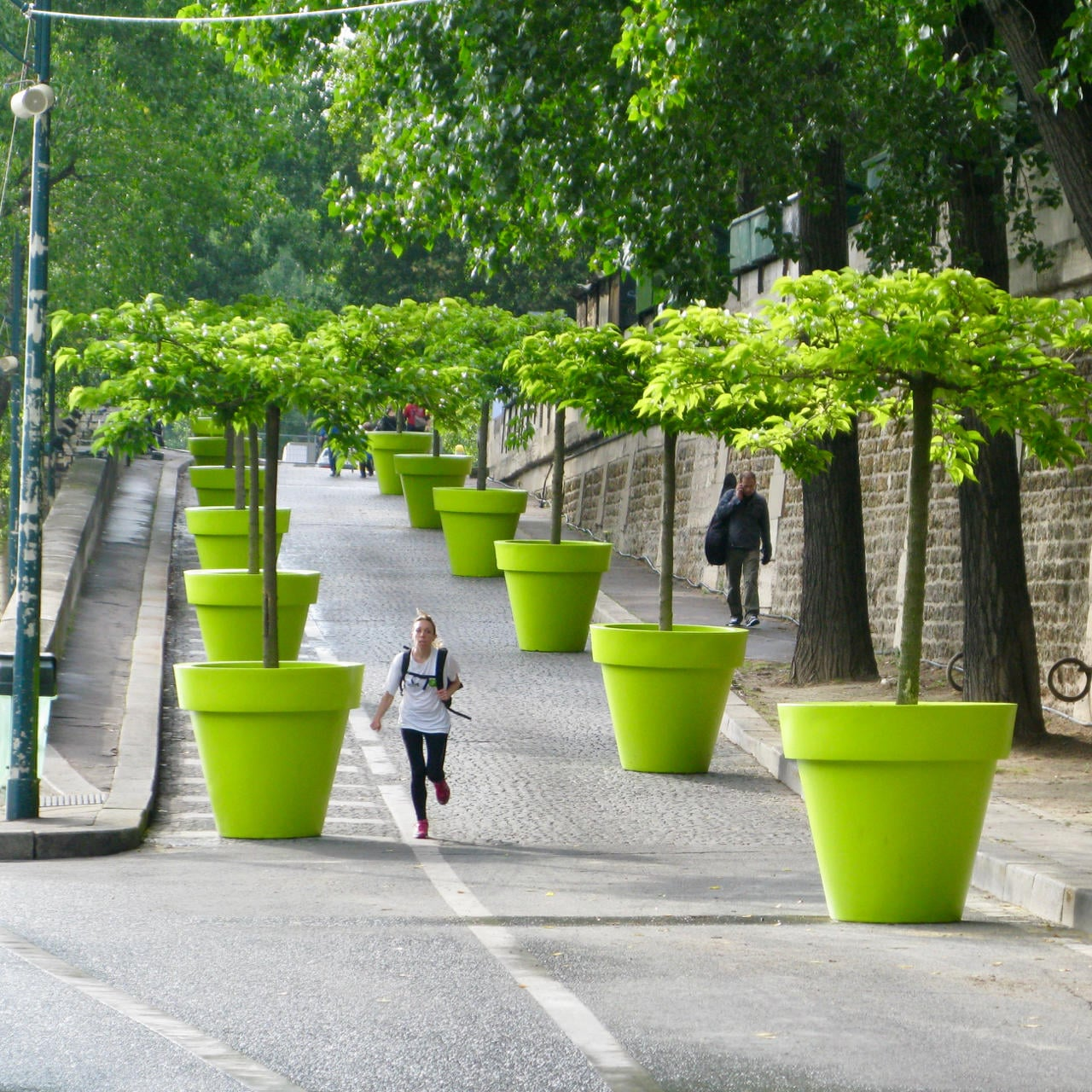 Study suggests trees are crucial to the future of our cities